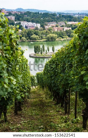 Vineyards in Stuttart - Bad Cannstatt: Very steep hills along river Neckar with the Max-Eyth See (lake) in the background - stock photo