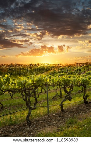 Vineyards in the Barossa Valley Australia - stock photo