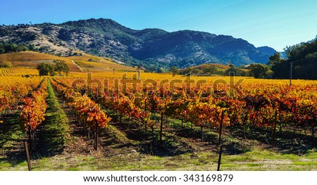 Vineyards in the Fall, Napa Valley - stock photo
