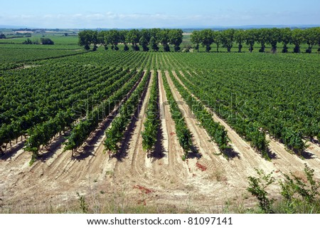 Vineyards in the Languedoc region of France