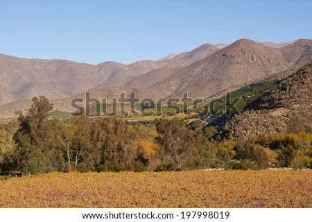 Vineyards in the Limari Valley in Central Chile