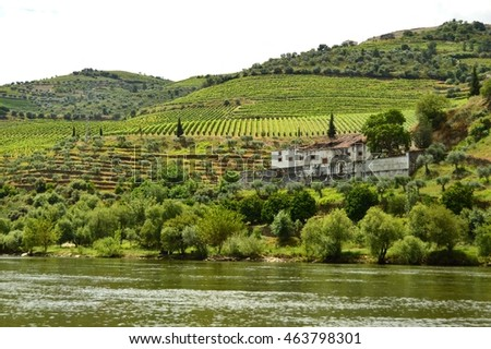 Vineyards in the Valley of the River Douro, Pinhao, Portugal