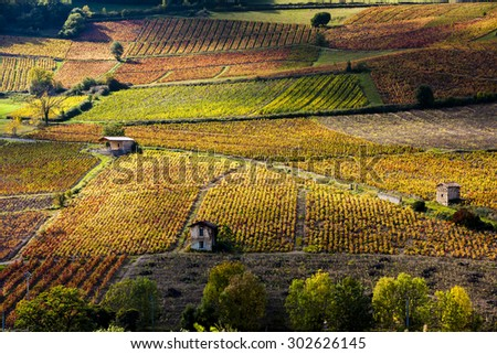 vineyards near Beaujeu, Beaujolais, Rhone-Alpes, France - stock photo