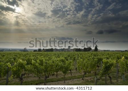 Vineyards near Bordeaux with an evening sky - stock photo