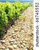 vineyards near Chateauneuf-du-Pape, Provence, France - stock photo