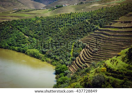 Vineyards near Duoro river in Pinhao, Portugal - stock photo