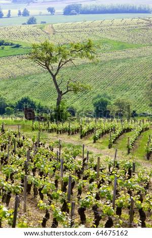 vineyards of Cote Chalonnaise region, Burgundy, France - stock photo