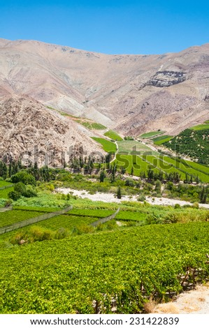 Vineyards of Elqui valley, Chile - stock photo