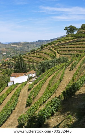 Vineyards of port wine in Douro valley, Portugal - stock photo