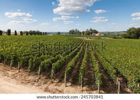 Vineyards of Saint Emilion, Bordeaux in France