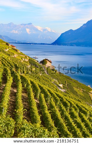 Vineyards of the Lavaux region over lake Leman (lake of Geneva) - stock photo
