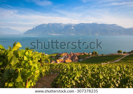 Vineyards of the Lavaux region over lake Leman (lake of Geneva),Switzerland - stock photo