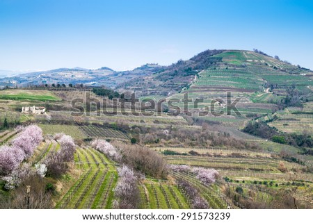 vineyards on the hills in spring, Soave, Italy - stock photo