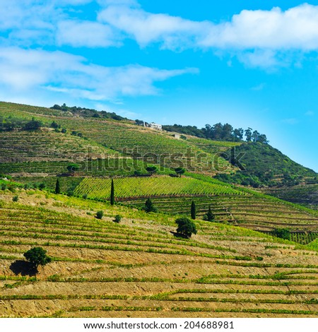 Vineyards on the Hills of Portugal