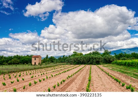 vineyards Provence - stock photo