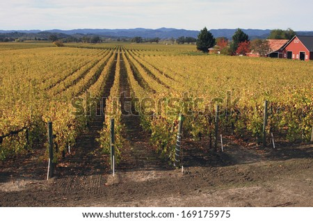 Vineyards, Russian River Valley, CA - stock photo