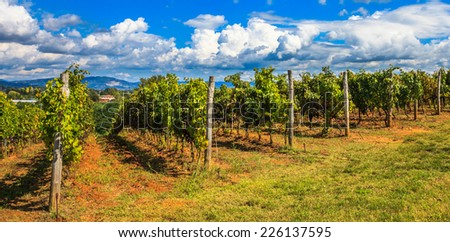 Vineyards under a dramatic sky in Tuscany, Italy. - stock photo