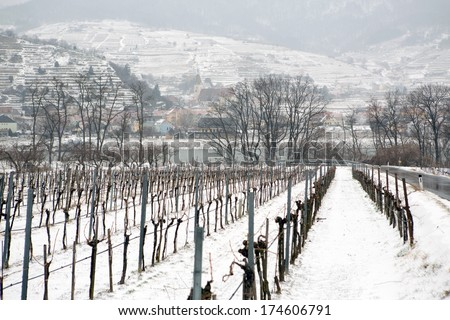 Vineyards under snow in winter in Austria  - stock photo