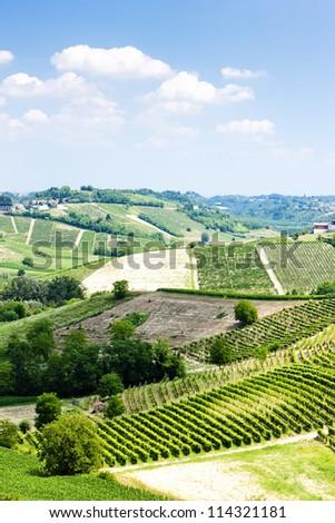 vineyars in Asti Region, Piedmont, Italy - stock photo