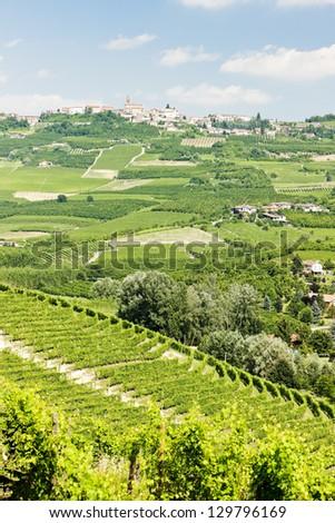 vineyars, Piedmont, Italy - stock photo
