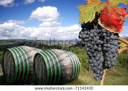 Vineyeard in Chianti, Tuscany, Italy, famous landscape - stock photo
