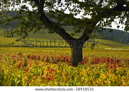 Vineyeard of Beaune - stock photo