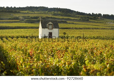 Vineyeards of Beaune - stock photo