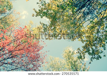 Vintage ar retro style image fall foliage. Birch trees in fall, Maine, decor or design image