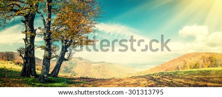 Vintage autumn landscape with golden tree in mountain, panorama - stock photo