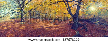 Vintage autumn landscape with the sun and a big tree - stock photo