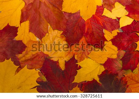 vintage autumn leaves with patina background