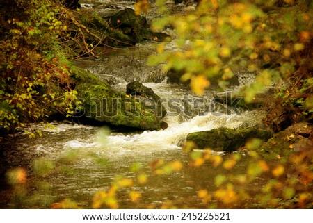 vintage autumn river details, textured nature background  - stock photo