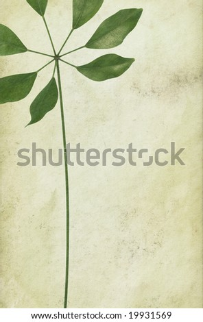 Vintage background and a leaf with a long foot-stalk. - stock photo