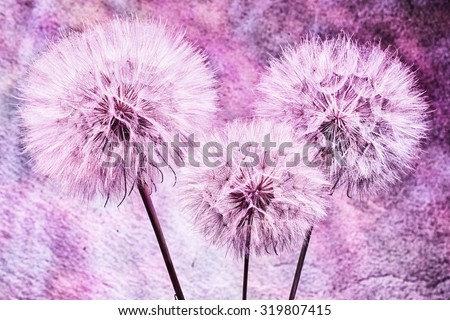 Vintage background - Vivid color abstract dandelion flower - extreme closeup with soft focus, beautiful nature details - stock photo