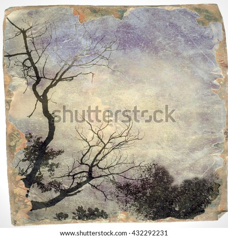 Vintage bare tree on sky in evening with borders - stock photo