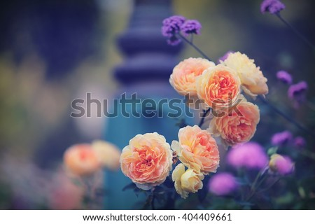 vintage beautiful flowers background - stock photo