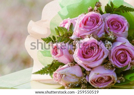 vintage beautiful pink rose flower blue tone background