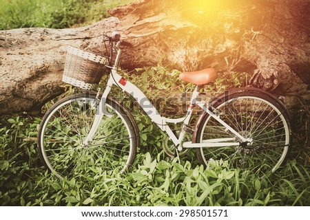 Vintage Bicycle with dry tree : vintage filter