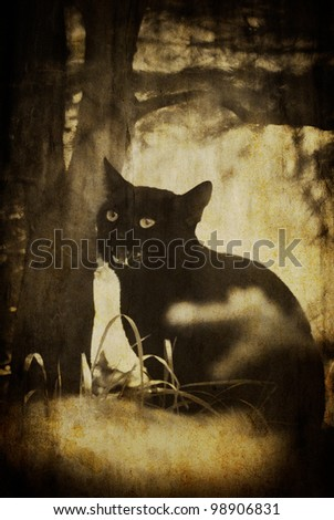 vintage black scary cat textured background - stock photo