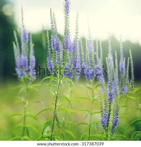 vintage blue meadow flowers in green field. Nature outdoor photo - stock photo
