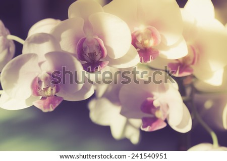 vintage branch of white orchid on a dark background selective focus - stock photo