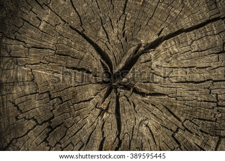 Vintage brown background of cracked section of old retro dry wood texture Grunge log tree cross section backdrop Empty space for inscription - stock photo