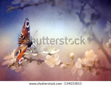 Vintage butterfly and cherry tree flower. Antique style photo with grunge old paper texture. - stock photo