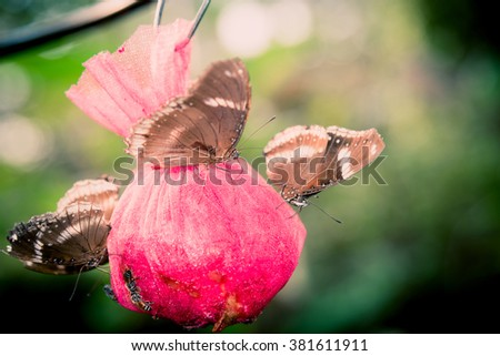 Vintage butterfly and cherry tree flower in spring