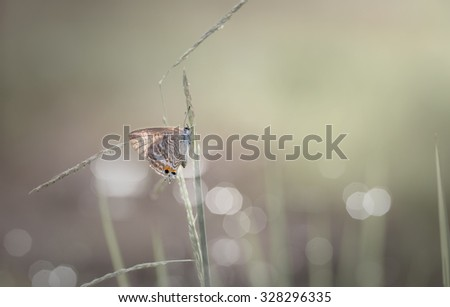 Vintage butterfly and grass  flower in spring