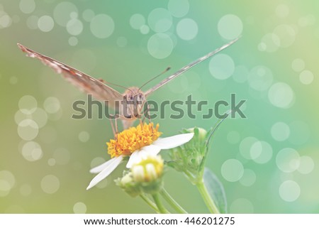 Vintage butterfly. Antique style photo of butterfly on flower .effect color filter.blur and noise with bokeh light. - stock photo
