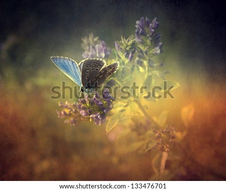 Vintage butterfly. Antique style photo of butterfly on flower with grunge old paper texture. - stock photo
