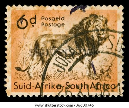 Vintage canceled postage stamp with lion illustration. South Africa, Johannesburg, 1958. - stock photo