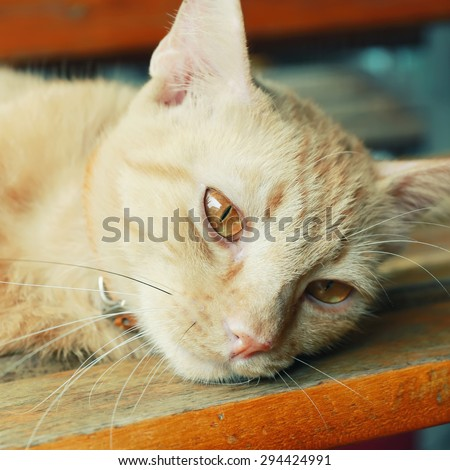 Vintage cat portrait focus at eye. - stock photo