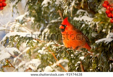 Vintage Christmas card with a beautiful male northern cardinal and red berries in the snow with copy space. - stock photo
